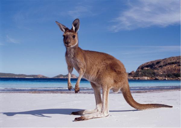 Research into evolution of Australian English?